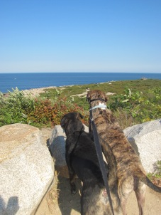 Halibut Point Sept 2012