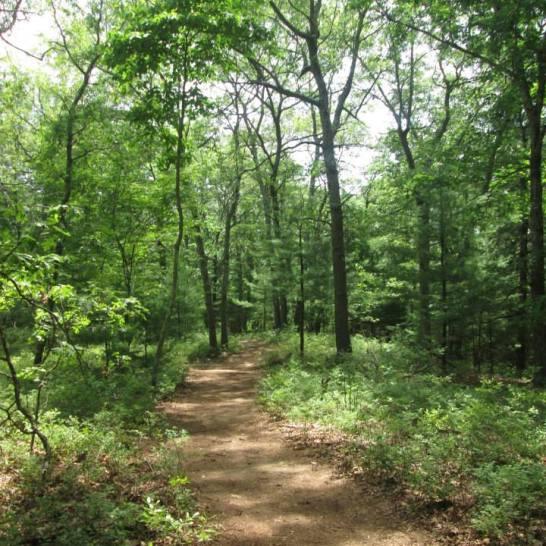 Noanet Woodlands 1