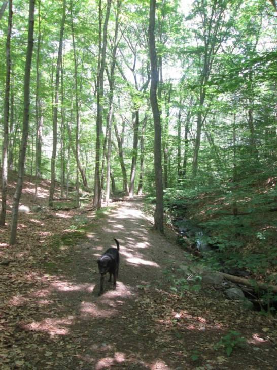 NOanet Woodlands 3