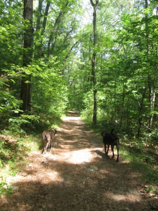 NOanet Woodlands 4
