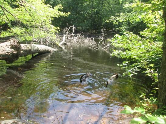 Noanet Woodlands 5