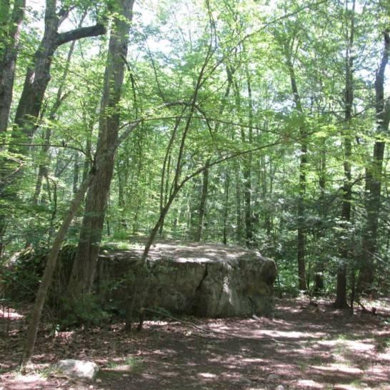 Noanet Woodlands 7