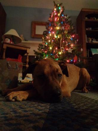 Christmas 2017 5