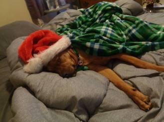 Christmas 2017 Wilma sleeping
