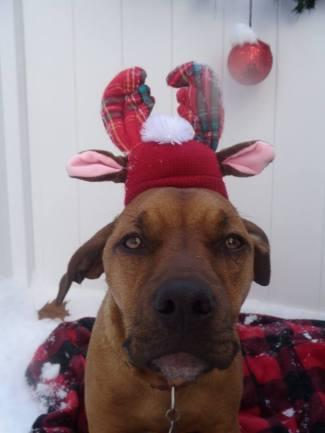 Christmas 2017 Wilma