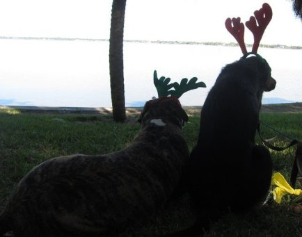 Christmas Shadow and Buster 2