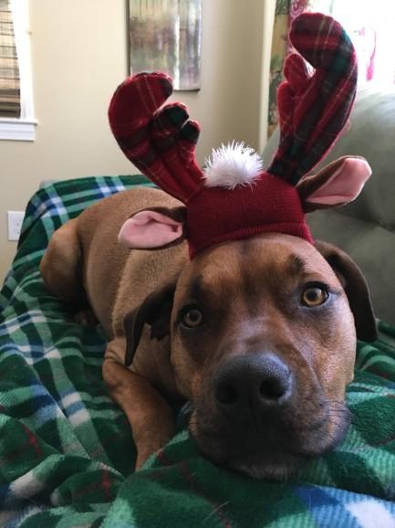 Wilma Christmas 1