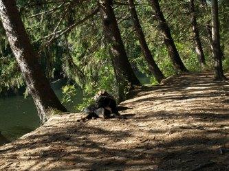 groton dog park 9