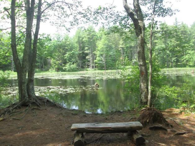 Beaver brook hollis 4