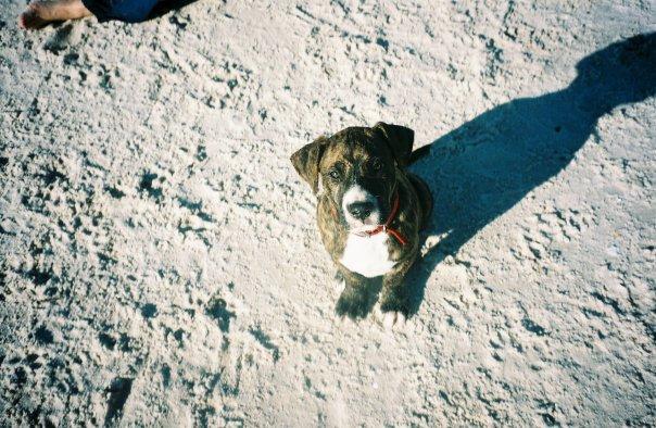 Buster puppy beach