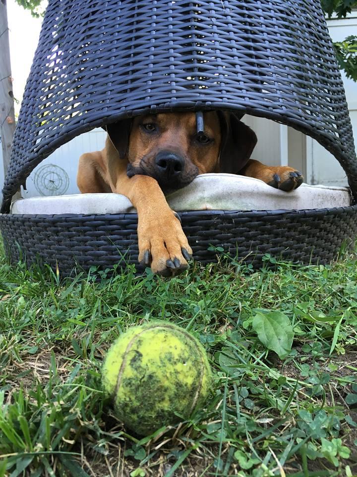 Wilma ball 2