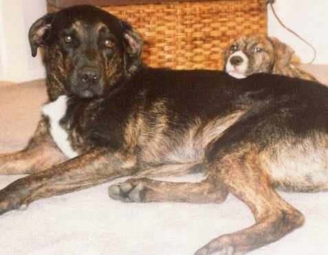 Shadow and Buster - Buster puppy