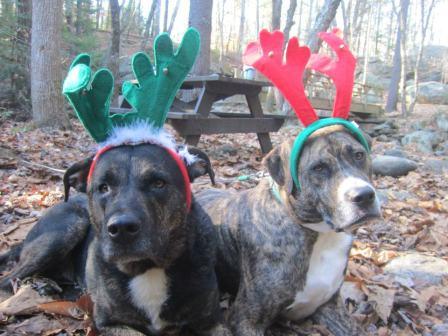Christmas Shadow and Buster
