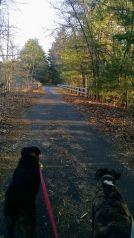 Pepperell Rail Trail 2