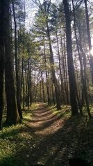 Pepperell Rail Trail 5