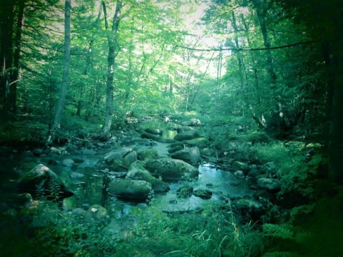 Willard Brook 15