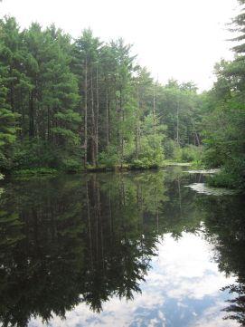 Great brook blog 1
