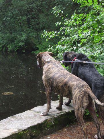 Great brook blog 6