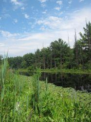 Great brook blog