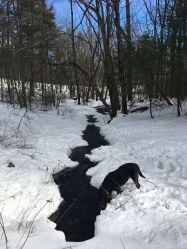 Great Brook shadow 1
