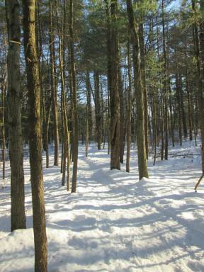 Great brook trail
