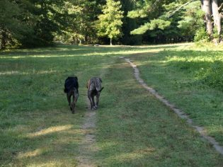 Groton Dog Park 14