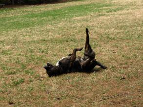 Groton Dog Park 7