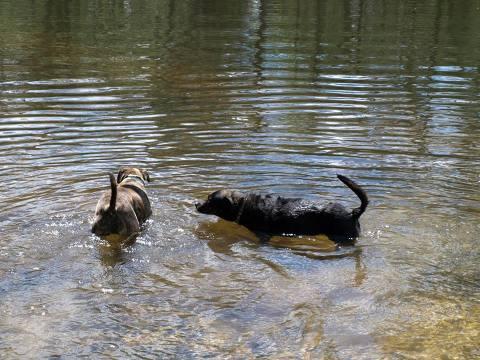 Groton Dog Park 8