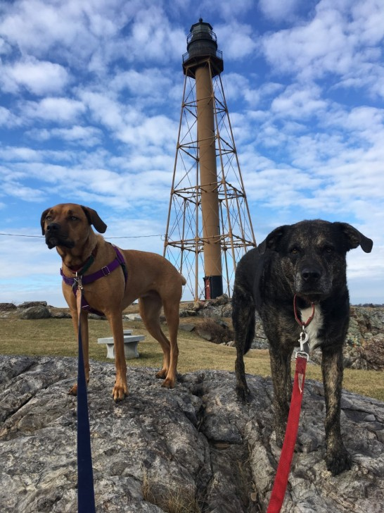 Marblehead lighthouse Shadow and wilma