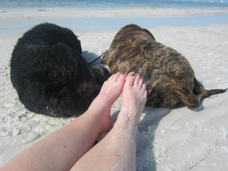 Shadow and Buster beach