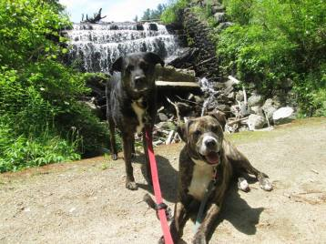 Shadow and Buster waterfall