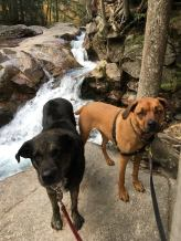 Shadow and Wilma waterfall
