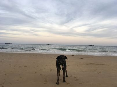 singing beach 1
