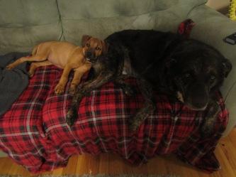 Wilma and Shadow cuddling
